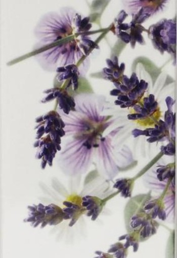 Yardley Lavender eau de toilette spray (50 ml)